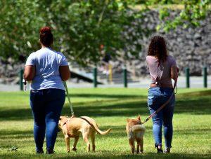 dog walking blog article