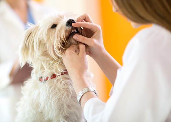 5 Ways to Care for Your Pet's Teeth