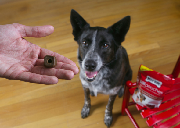 6 Tricks for Giving Dogs Medication