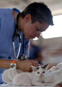 vet with kitten